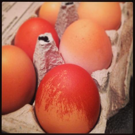 colorful, farm-fresh, eggs, organic, local